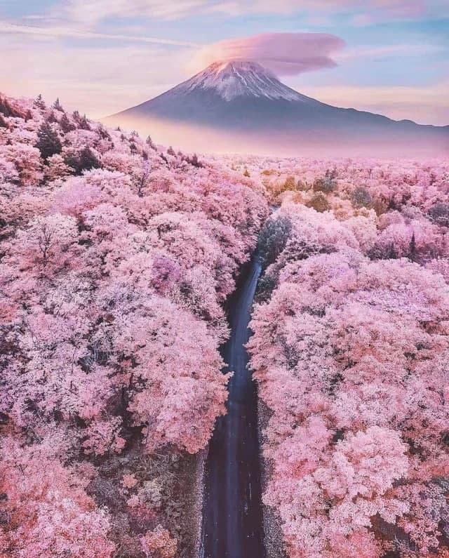Yaponiyadagi Fuji tog'i