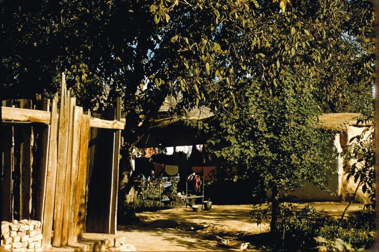 Toshkent 1956 yilda